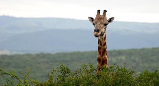 Hilltop Camp Hluhluwe iMfolozi Game Reserve uMfolozi South Africa KwaZulu-Natal